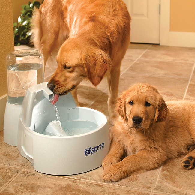Drinkwell Big Dog Pet Fountain